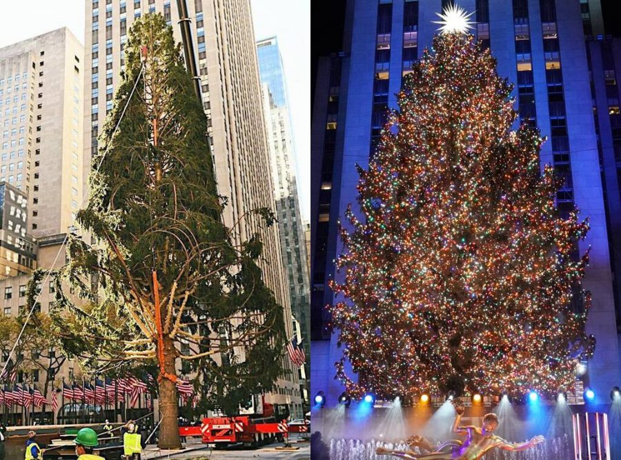 A before and after the 2020 Rockefeller Tree.